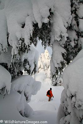 Snowshorer