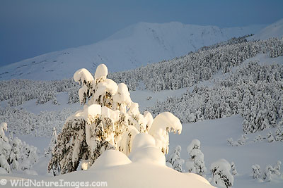 Chugach National Forest Winter Wonderland