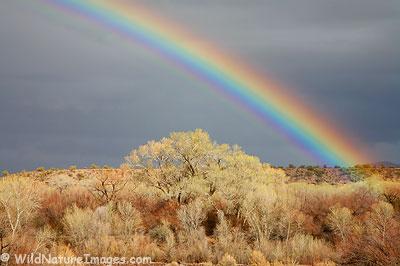 Verde River Rainbow
