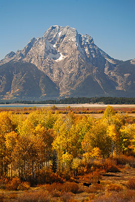 Mount Moran and Moose