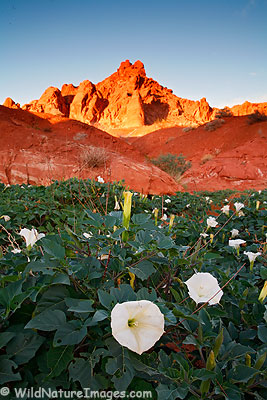 Valley of Fire Photo