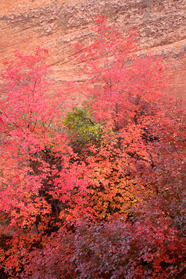 Zion National Park during Autumn