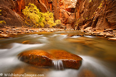 Narrows, Zion National Park