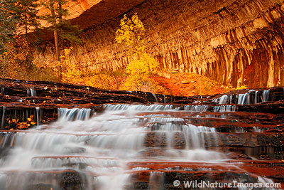 Left Fork, North Creek, Zion National Park, Utah