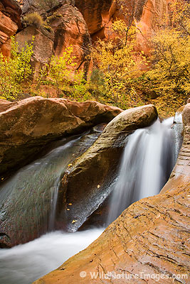 Zion Area Stream and Fall Colors