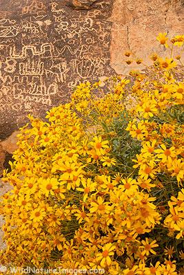 Native Rock Art